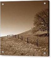 Ranch Road Oak Acrylic Print by Kathy Yates