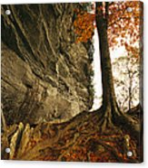 Raven Rock And Autumn Colored Beech Acrylic Print by Raymond Gehman