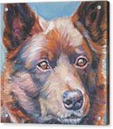 red Australian Kelpie Acrylic Print by Lee Ann Shepard