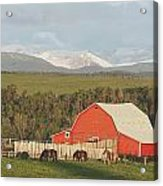 Red Barn With Horses Grazing Acrylic Print by Michael Interisano