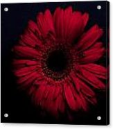 Red Flower Acrylic Print by Ron Smith