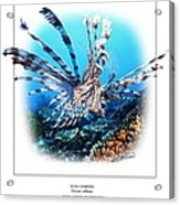 Red Lionfish Acrylic Print by Owen Bell