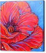 Red Poppy Acrylic Print by Jenn Cunningham
