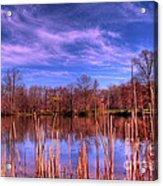 Reeds Acrylic Print by Paul Ward