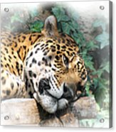 Relaxing 2 Acrylic Print by Ernie Echols