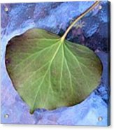 Reverse Ivy On Blue Acrylic Print by Beth Akerman