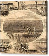 Rice Plantation, 1866 Acrylic Print by Granger