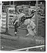 Ride 'em Cowboy Acrylic Print by Shawn Naranjo
