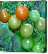 Ripen On The Vine Acrylic Print by Barbara S Nickerson