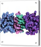 Rna-editing Enzyme, Molecular Model Acrylic Print by Laguna Design