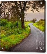 Road On Woods Acrylic Print by Carlos Caetano