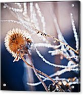 Road Side Plant Acrylic Print by Lisa  Spencer