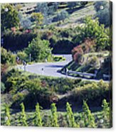 Road Winding Through Vineyard And Olive Trees Acrylic Print by Jeremy Woodhouse