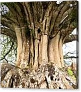 Roots Acrylic Print by Heiko Koehrer-Wagner
