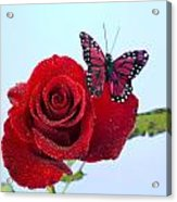 Rose Red Butterfly Isolated On Blue Acrylic Print by M K  Miller