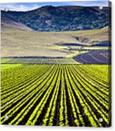 Rural Landscape With Planted Crops Acrylic Print by David Buffington