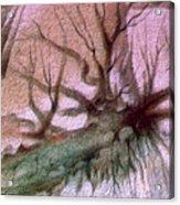 Sagada Hanging Roots 1982 Acrylic Print by Glenn Bautista