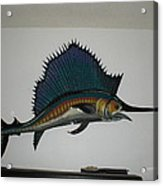 Sailfish Acrylic Print by Val Oconnor