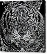 Samson Acrylic Print by Jim Ross