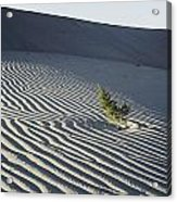 Sand Dunes, Death Valley, California Acrylic Print by Marc Moritsch