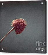 Sans Nom - S03at01b Acrylic Print by Variance Collections