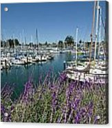 Santa Cruz Harbor - California Acrylic Print by Brendan Reals