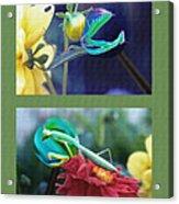 Science Class Diptych 2 - Praying Mantis Acrylic Print by Steve Ohlsen