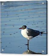 Sea Bird Reflection Acrylic Print by Pat Exum