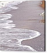 Sea Gull Reflection Acrylic Print by Cindy Lee Longhini