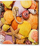 Sea Horse Starfish And Seashells  Acrylic Print by Garry Gay