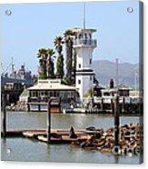Sea Lions At Pier 39 San Francisco California . 7d14294 Acrylic Print by Wingsdomain Art and Photography