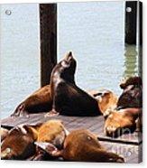 Sea Lions At Pier 39 San Francisco California . 7d14314 Acrylic Print by Wingsdomain Art and Photography