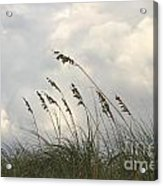 Sea Oats Acrylic Print by Blink Images