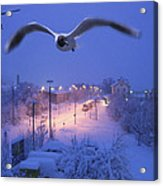 Seagull At Winter Acrylic Print by Nafets Nuarb