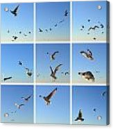 Seagull Collage 2 Acrylic Print by Michelle Calkins