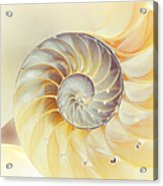 Seashell. Light Version Acrylic Print by Jenny Rainbow