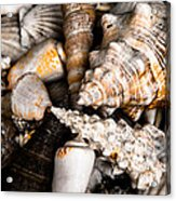 Seashells Acrylic Print by Hakon Soreide
