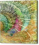 Season Of The Shell Acrylic Print by Betsy Knapp
