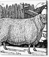 Sheep, 1788 Acrylic Print by Granger