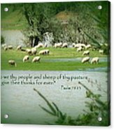 Sheep Grazing Scripture Acrylic Print by Cindy Wright