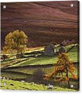Sheep On A Hill, North Yorkshire Acrylic Print by John Short
