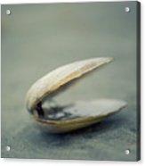 Shell Acrylic Print by Jill Ferry Photography