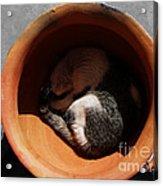 Siesta 2 Acrylic Print by Xueling Zou
