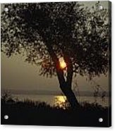 Silhouette Of Willow Tree At Sunset Acrylic Print by Al Petteway