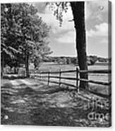 Simple Times Acrylic Print by Catherine Reusch  Daley