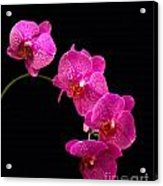 Simply Beautiful Purple Orchids Acrylic Print by Michael Waters