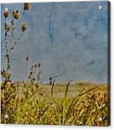 Singing In The Grass Acrylic Print by Jerry Cordeiro
