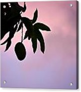 Single Mango On A Tree At Twilight Acrylic Print by Anya Brewley schultheiss