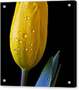 Single Yellow Tulip Acrylic Print by Garry Gay