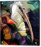 Sir Ibis Acrylic Print by Doris Wood